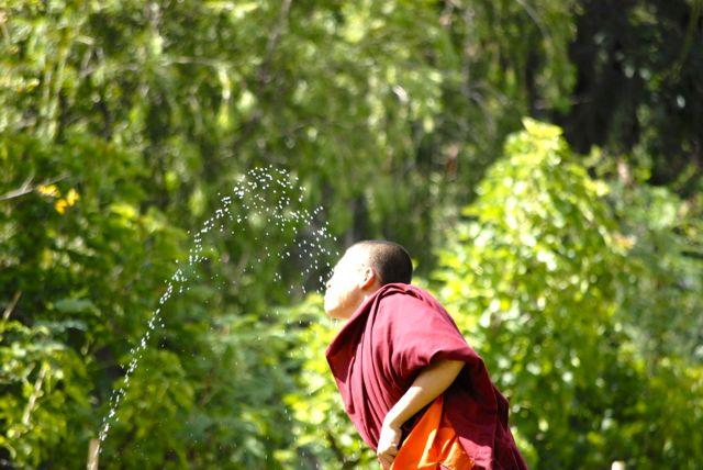 monaco acqua