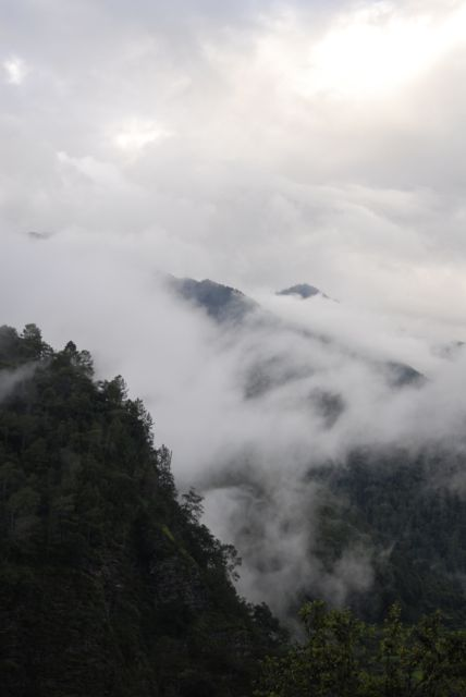 nebbia alberi